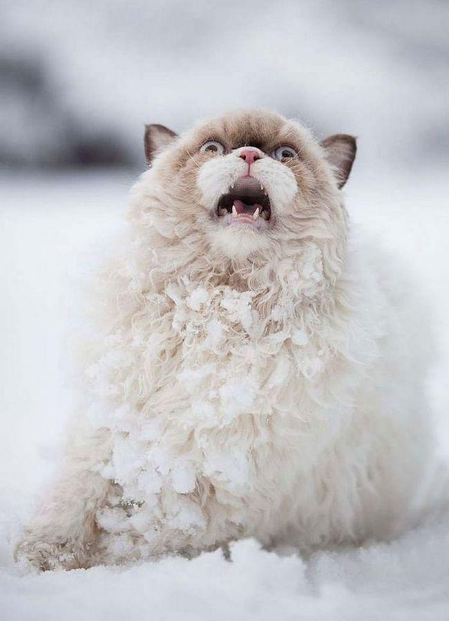 Фотографії тварин, які вперше побачили сніг