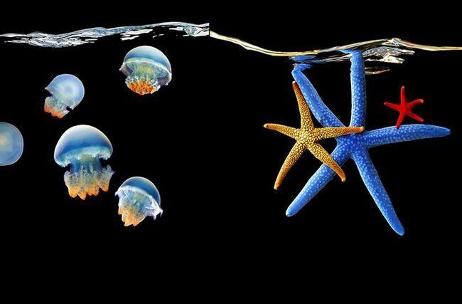 Фотопроект Море Марка лаїти