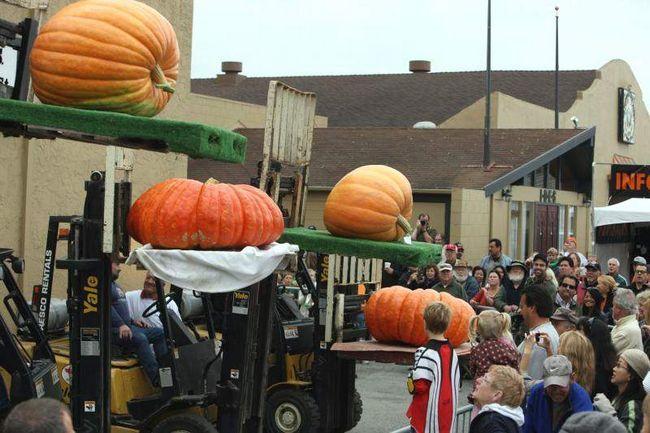 Чотири великі гарбузів виставлені на конкурсі краси на Конкурсі на найбільший гарбуз у Хаф Мун Бей 12 жовтня 2009 року. (UPI / Terry Schmitt)