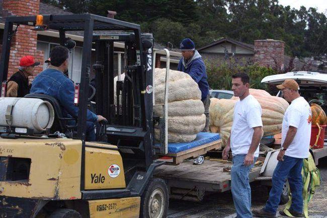 Робочі пересувають гігантські гарбузи для зважування. (UPI / Terry Schmitt)