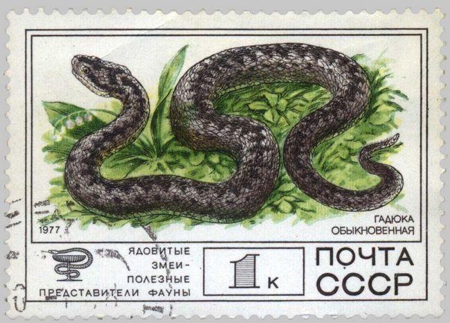 Гадюку увічнили навіть зобразивши на поштовій марці колишнього СРСР