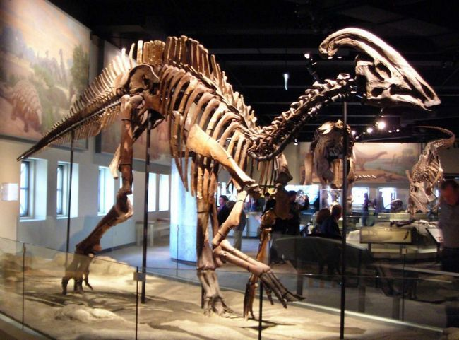 Збережений кістяк гадрозавра
