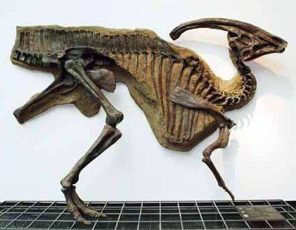 Скам`янілі останки дитинчати гадрозавра