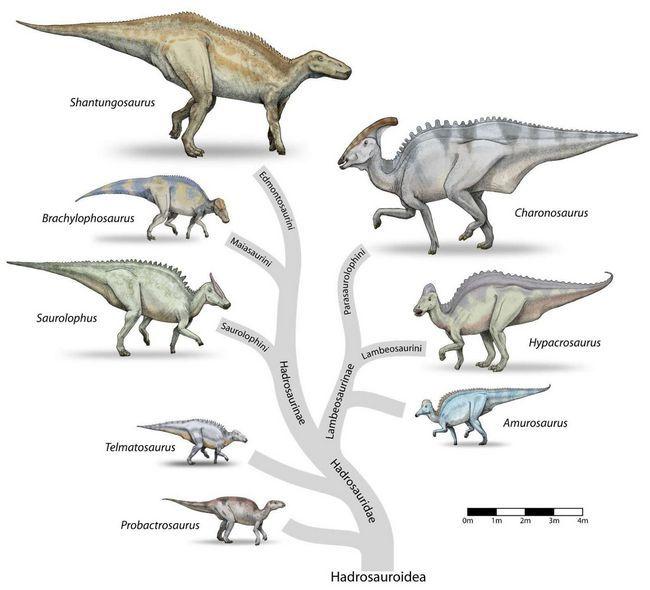 Види гадрозавров.