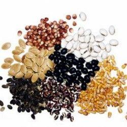 Генетична неоднорідність насіння, її типи та значення