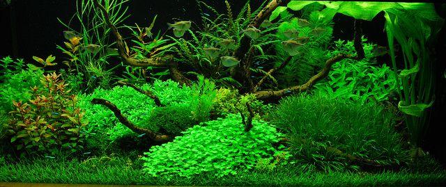 Голландський акваріум