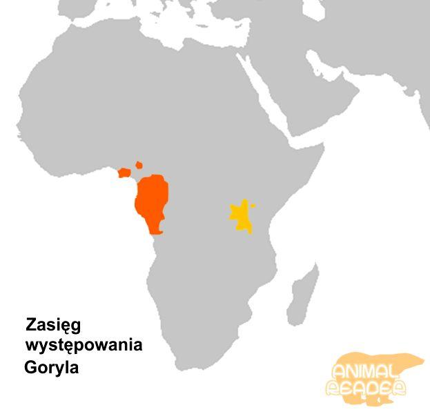 Ареал проживання горил
