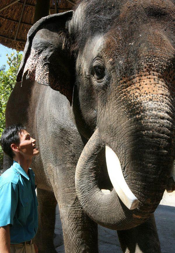 Хто говорить слон Косик (Kosik) з південнокорейського зоопарку