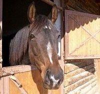 Грип коней