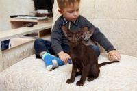 орієнтальна кішка і діти