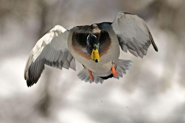 Фото крижні в польоті