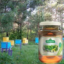 Характеристики лісового меду, його корисні і лікувальні властивості, протипоказання