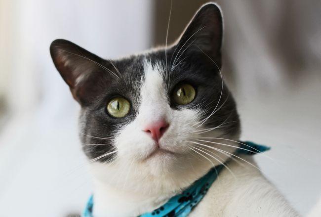 Хелавіт з для кішок: інструкція із застосування