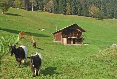 Хлів для кози, будуємо своїми руками