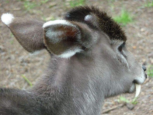 На голові у тварини забавний стирчить хутро.