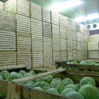 Зберігання капустяних овочів