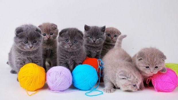 Іграшки для кішок своїми руками: 20 ідей для вашої кішки