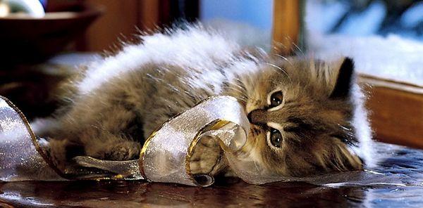 Іграшки для кішок своїми руками