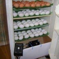 Інкубатор своїми руками з холодильника | вдео | фото схема
