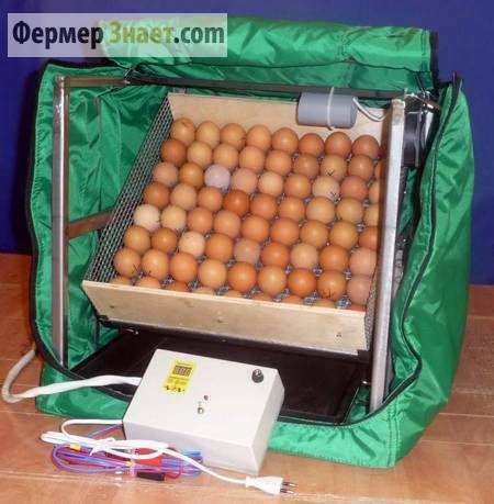 Закладка яєць