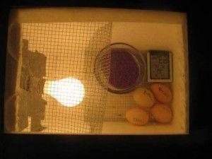 Саморобний інкубатор з яйцями