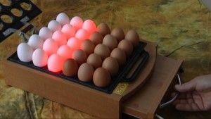 Перевірка яєць на просвіт
