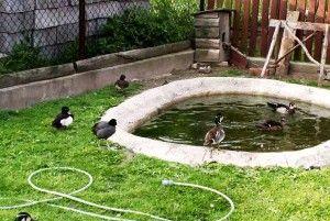 Штучна водойма для водоплавної птиці