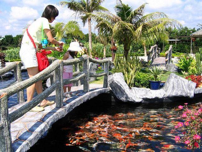 Японці приходять в парк спеціально, щоб погодувати вряди.