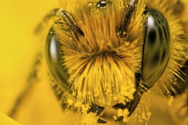 Цікаві факти з життя бджіл