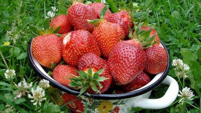 Цікаві факти про полуницю