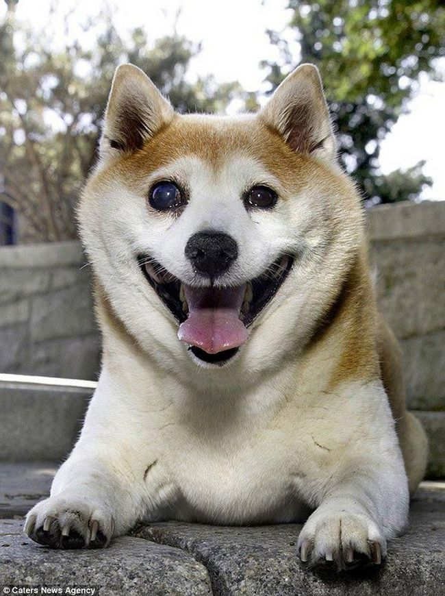 Собака-улибака