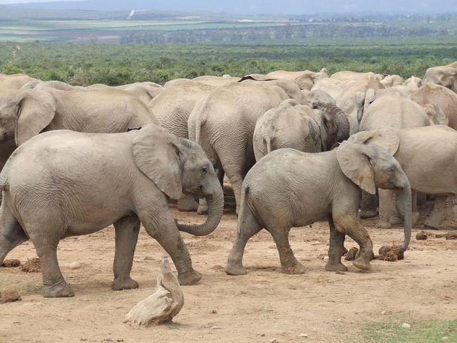 Марш слонів в Лондоні