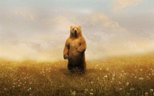 Цікаве про тварин: ведмідь бурий.