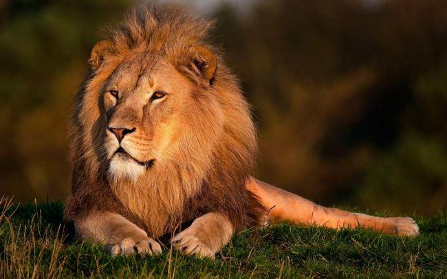 Леви: їхнє життя - суцільне спаровування.