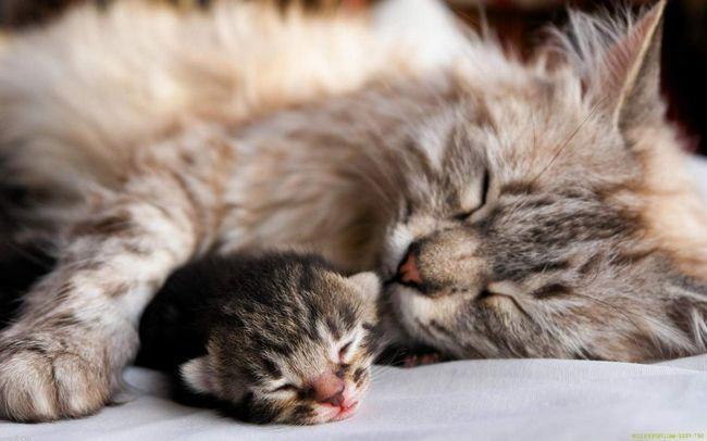 Кішки сплять 16 годин в день.