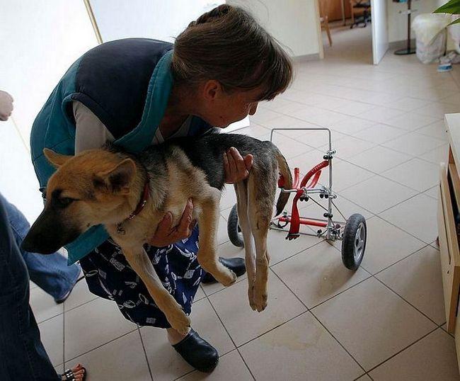 Історія порятунку цуценяти-інваліда по кличці Чухча