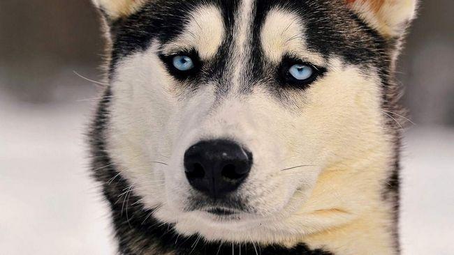 На шиї у собаки знайшли чіп з кличкою Белла.