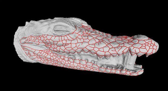 З життя крокодилів