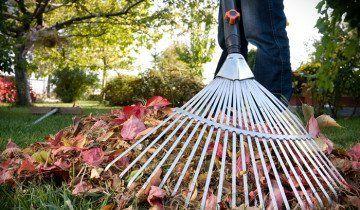 Прибирання листя граблями, sadomaniya.r