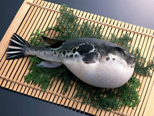 Японці знають всі секрети приготування отруйної риби-їжак.