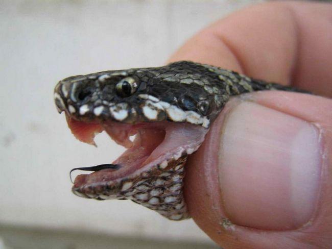 Змія вкусила хлопчика.