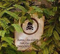 Отруйні рослини і запобіжні заходи при контакті з ними