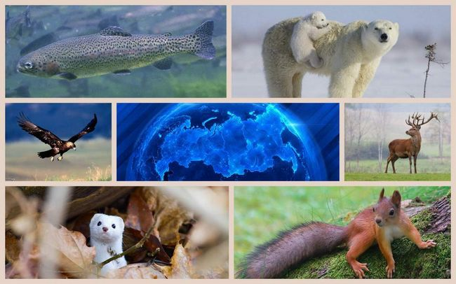 Тваринний світ росії
