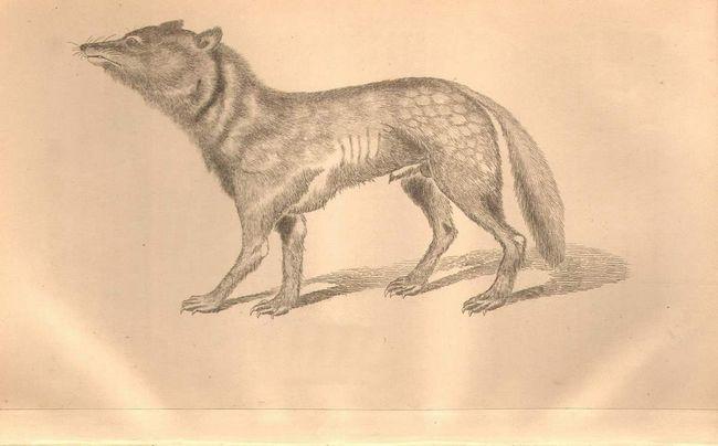 Японського вовка зображували у багатьох посібниках і книгах.