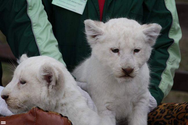 Співробітники зоопарку придумують імена для нових