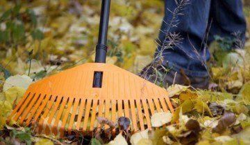 Прибирання листя під деревом, 7dach.ru