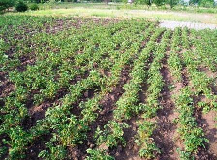 Екологічно чисті продукти вирощування