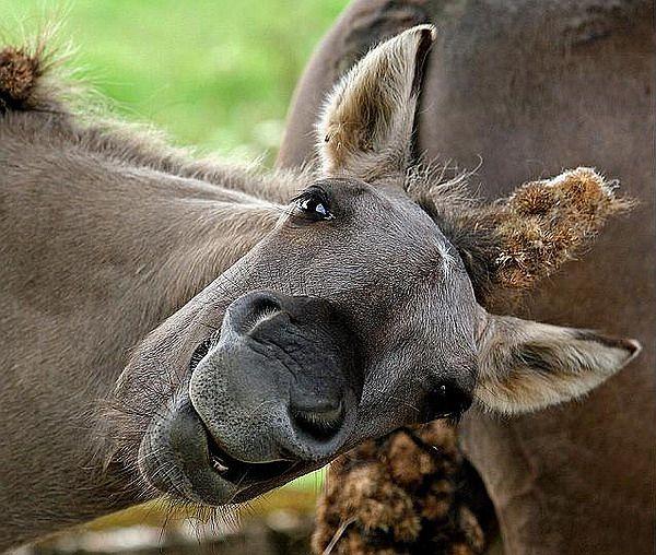 Всі ми трішечки коні, фотограф ..