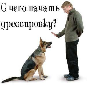 Як дресирувати собаку? Всі команди для собак.