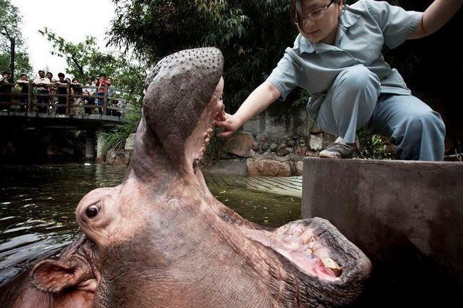Зубна щітка для гіпопотама